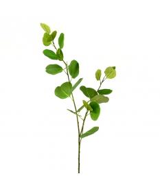 GREEN EUCALIPTUS BRANCH